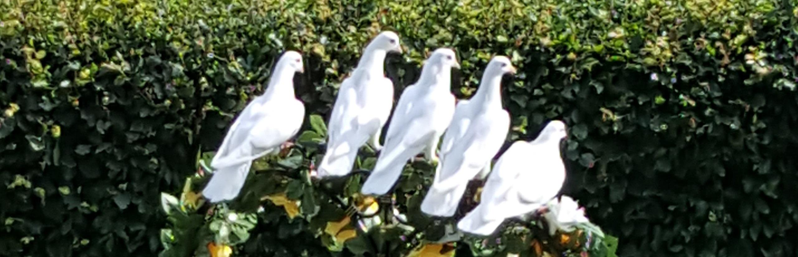Christian G. Binder - Alternative/Freie Trauung mit Tauben